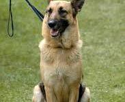 addestrare un cane al guinzaglio