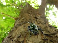 10 alrak-long-horned-beetle-1693597_1920